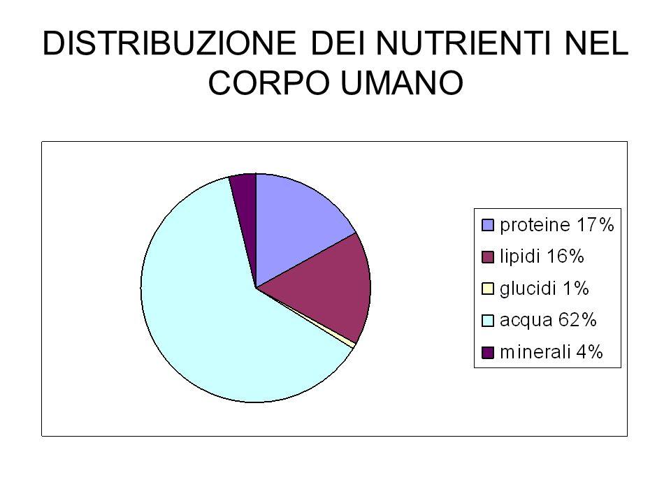 DISTRIBUZIONE DEI NUTRIENTI NEL CORPO UMANO