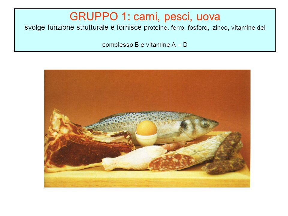 GRUPPO 1: carni, pesci, uova svolge funzione strutturale e fornisce proteine, ferro, fosforo, zinco, vitamine del complesso B e vitamine A – D