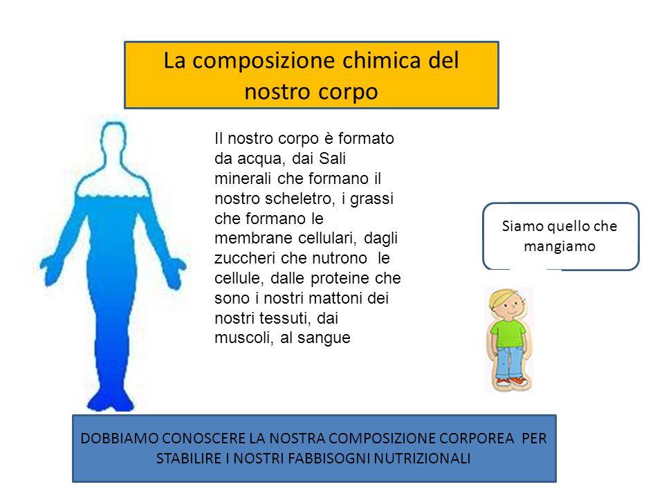 La composizione chimica del nostro corpo