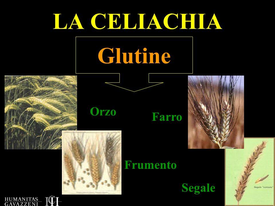 LA CELIACHIA Glutine Orzo Farro Frumento Segale