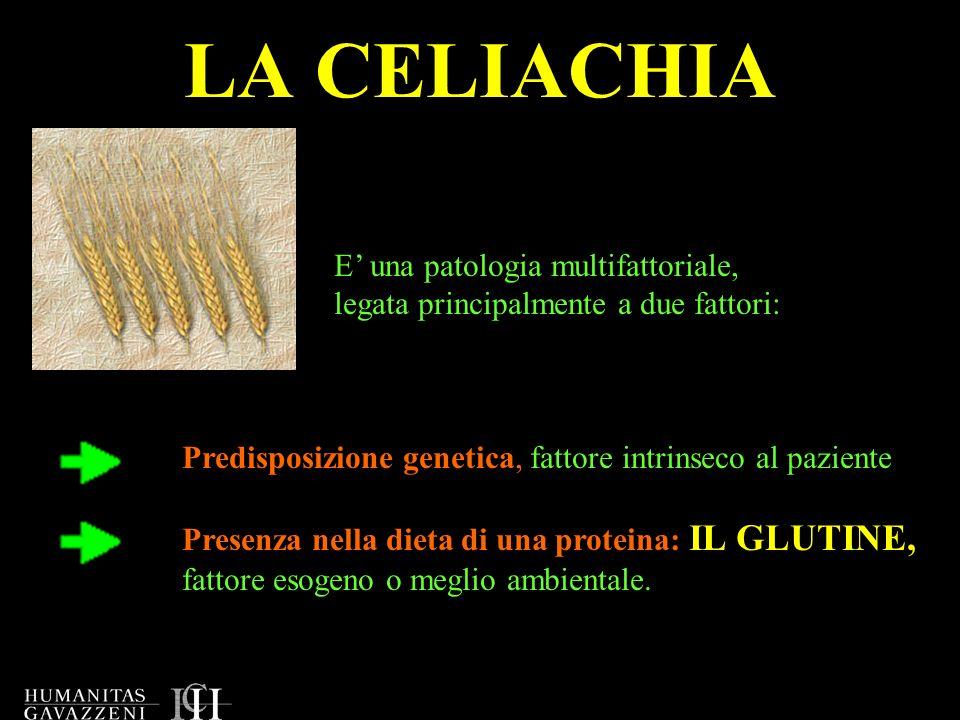 LA CELIACHIA E' una patologia multifattoriale,
