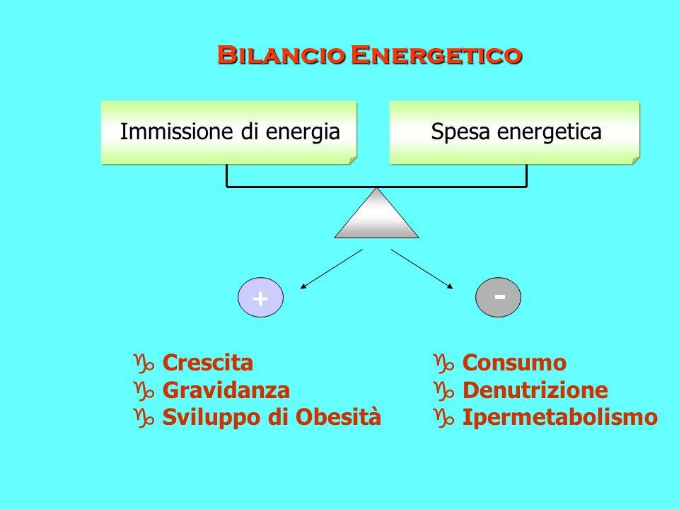 - Bilancio Energetico Immissione di energia Spesa energetica +