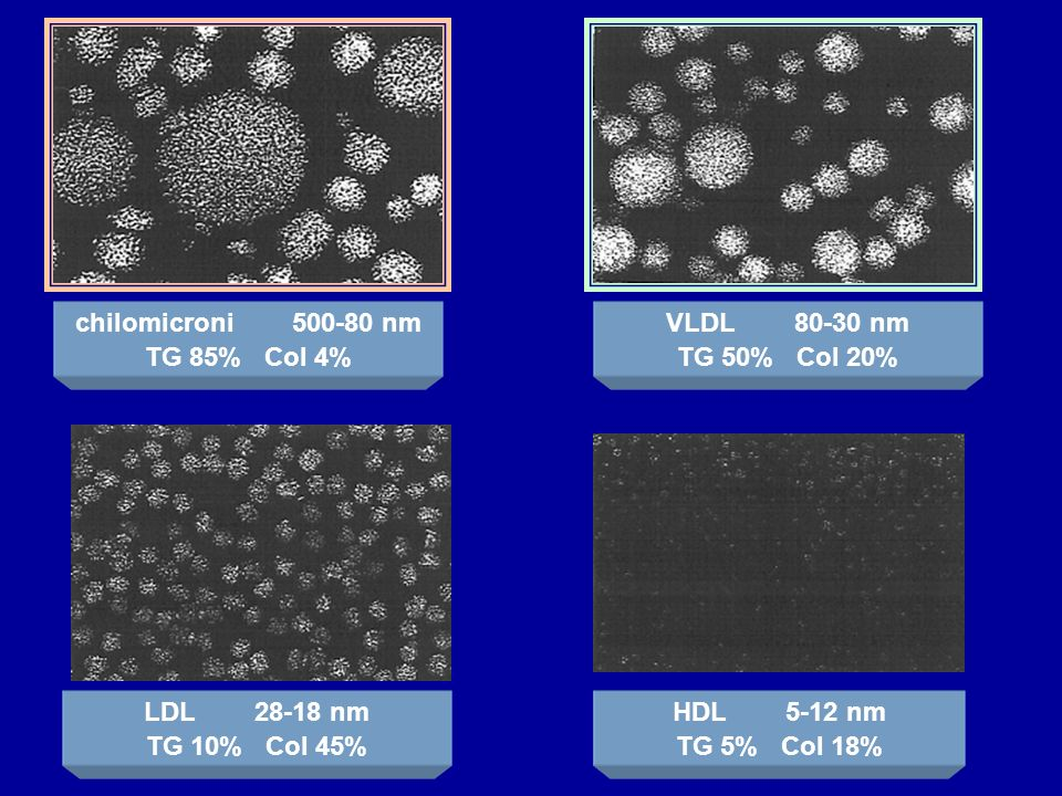 chilomicroni 500-80 nm TG 85% Col 4% VLDL 80-30 nm. TG 50% Col 20% LDL 28-18 nm.