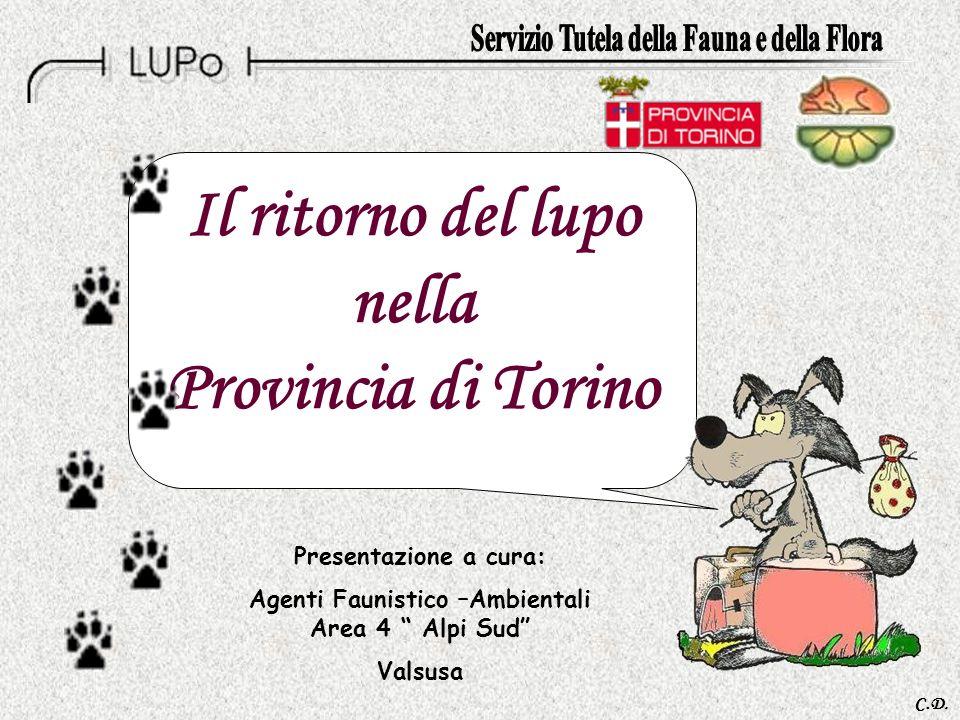 Il ritorno del lupo nella Provincia di Torino