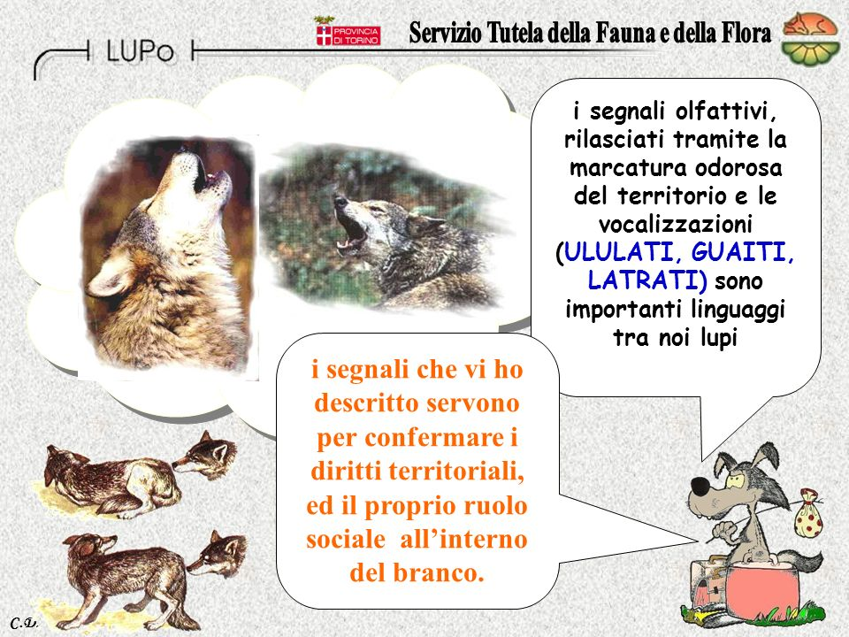 Servizio Tutela della Fauna e della Flora