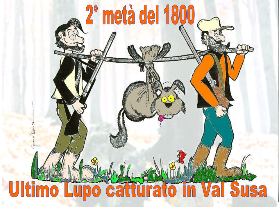 Ultimo Lupo catturato in Val Susa