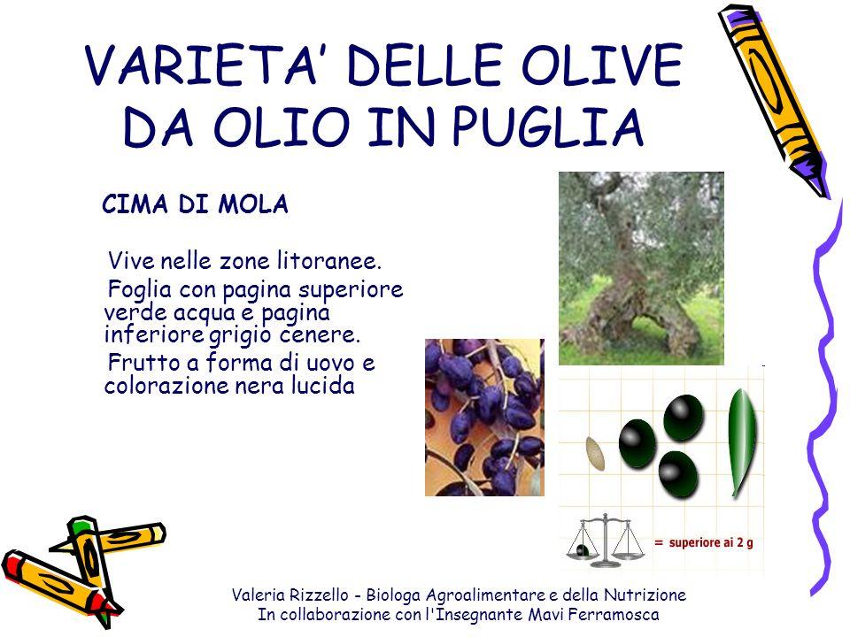 VARIETA' DELLE OLIVE DA OLIO IN PUGLIA