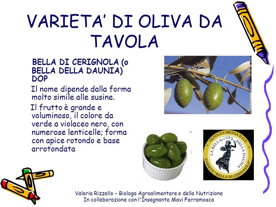 VARIETA' DI OLIVA DA TAVOLA