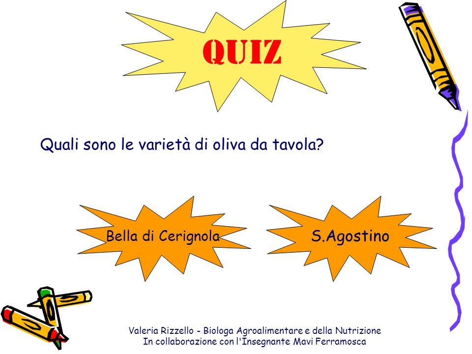 QUIZ Quali sono le varietà di oliva da tavola S.Agostino