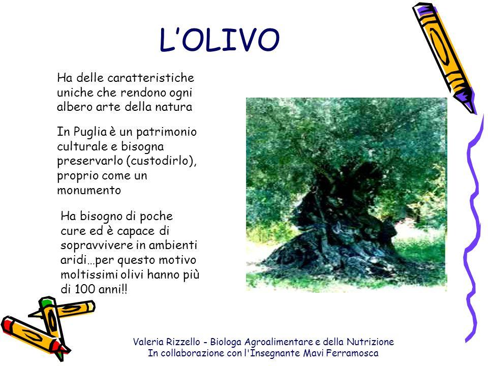 L'OLIVO Ha delle caratteristiche uniche che rendono ogni albero arte della natura.