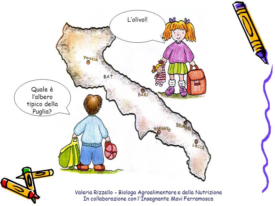 Quale è l'albero tipico della Puglia