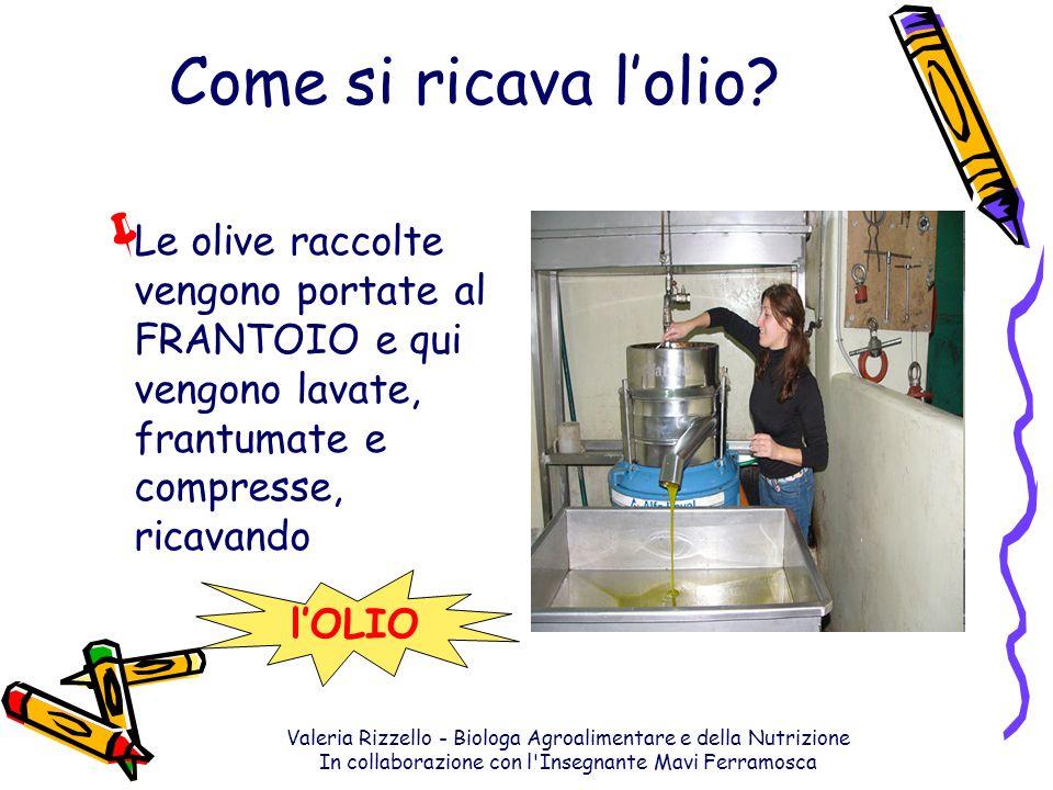 Come si ricava l'olio Le olive raccolte vengono portate al FRANTOIO e qui vengono lavate, frantumate e compresse, ricavando.