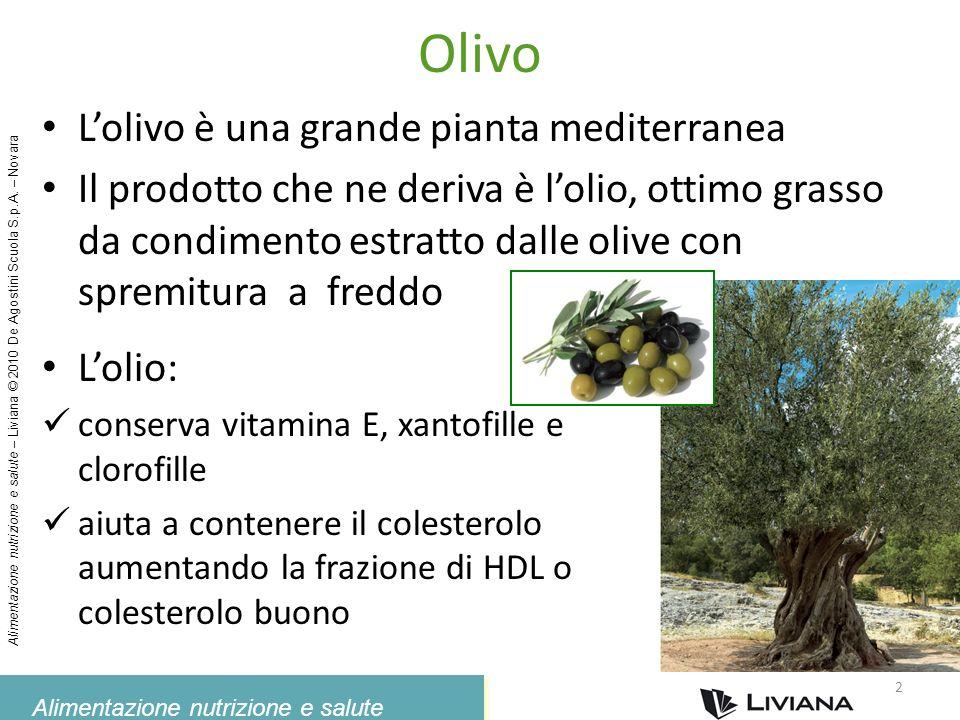 Olivo L'olivo è una grande pianta mediterranea