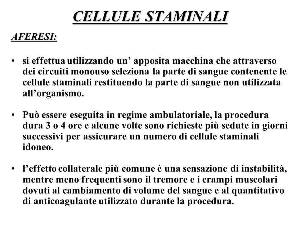 CELLULE STAMINALI AFERESI: