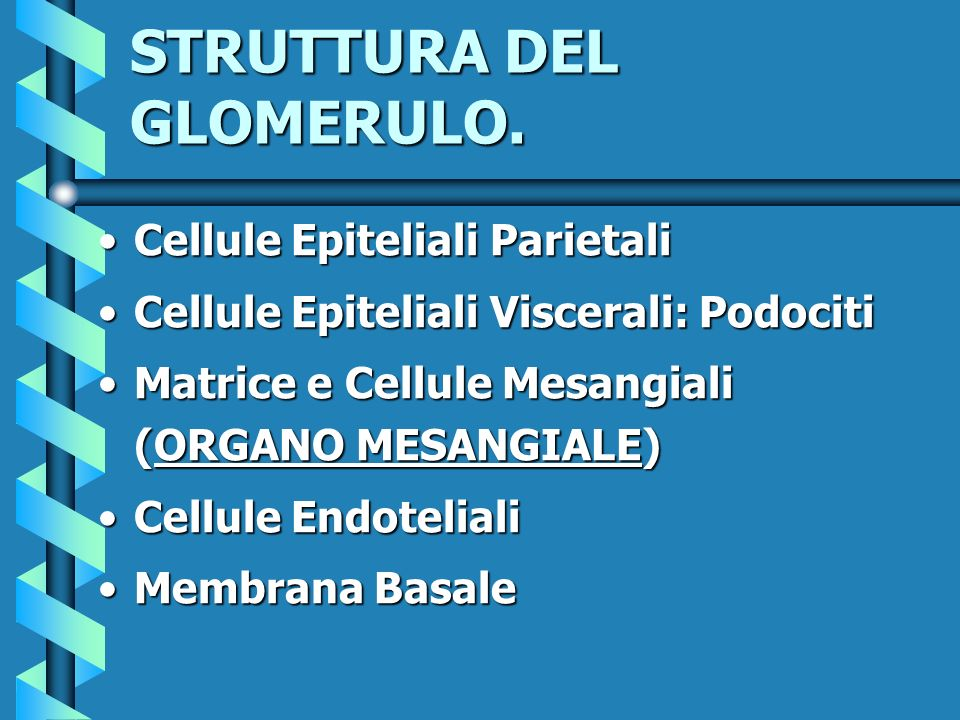 STRUTTURA DEL GLOMERULO.