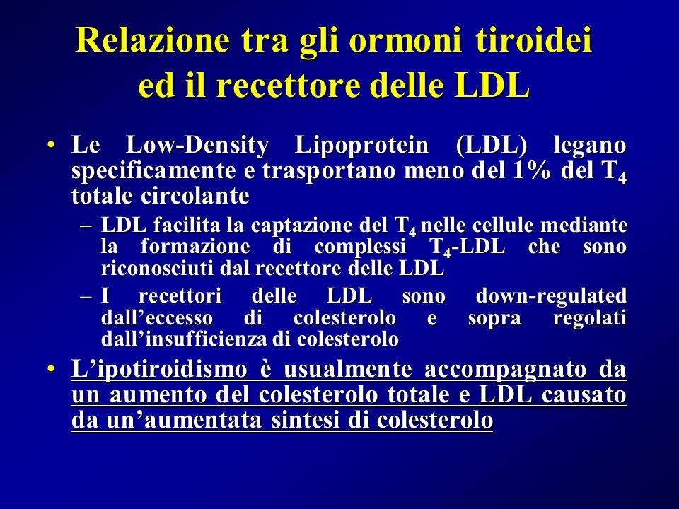 Relazione tra gli ormoni tiroidei ed il recettore delle LDL