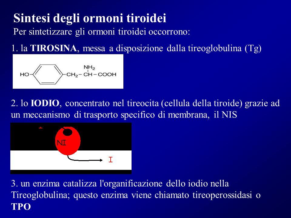 Sintesi degli ormoni tiroidei
