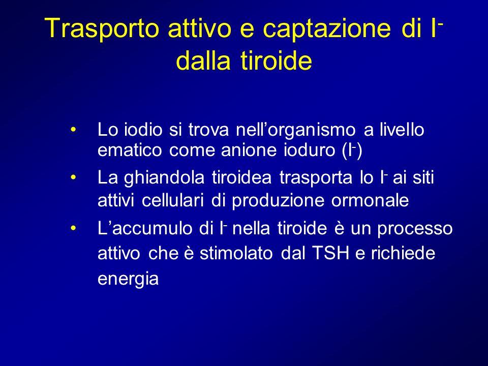 Trasporto attivo e captazione di I- dalla tiroide