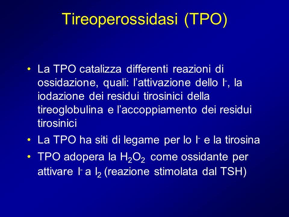 Tireoperossidasi (TPO)
