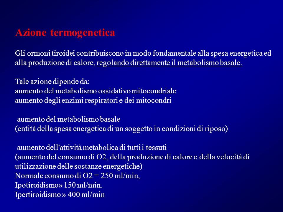 Azione termogenetica