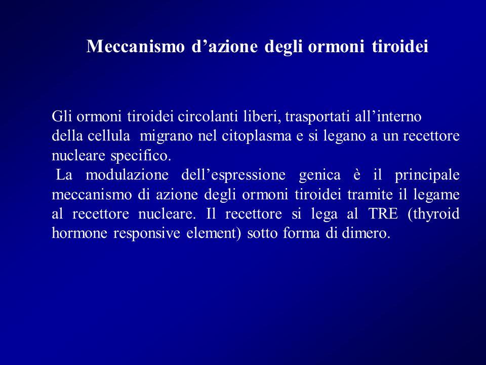 Meccanismo d'azione degli ormoni tiroidei