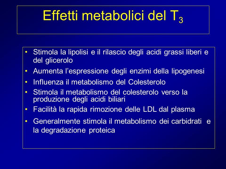 Effetti metabolici del T3