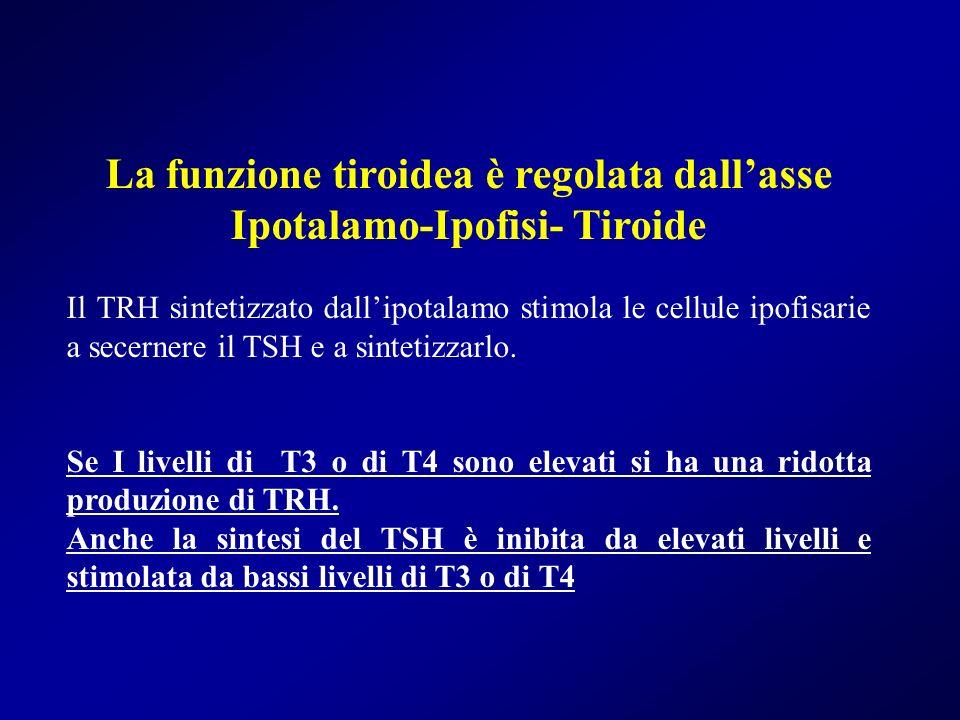 La funzione tiroidea è regolata dall'asse Ipotalamo-Ipofisi- Tiroide