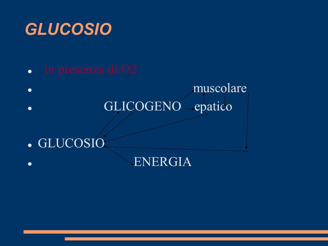GLUCOSIO in presenza di O2 muscolare GLICOGENO epatico GLUCOSIO