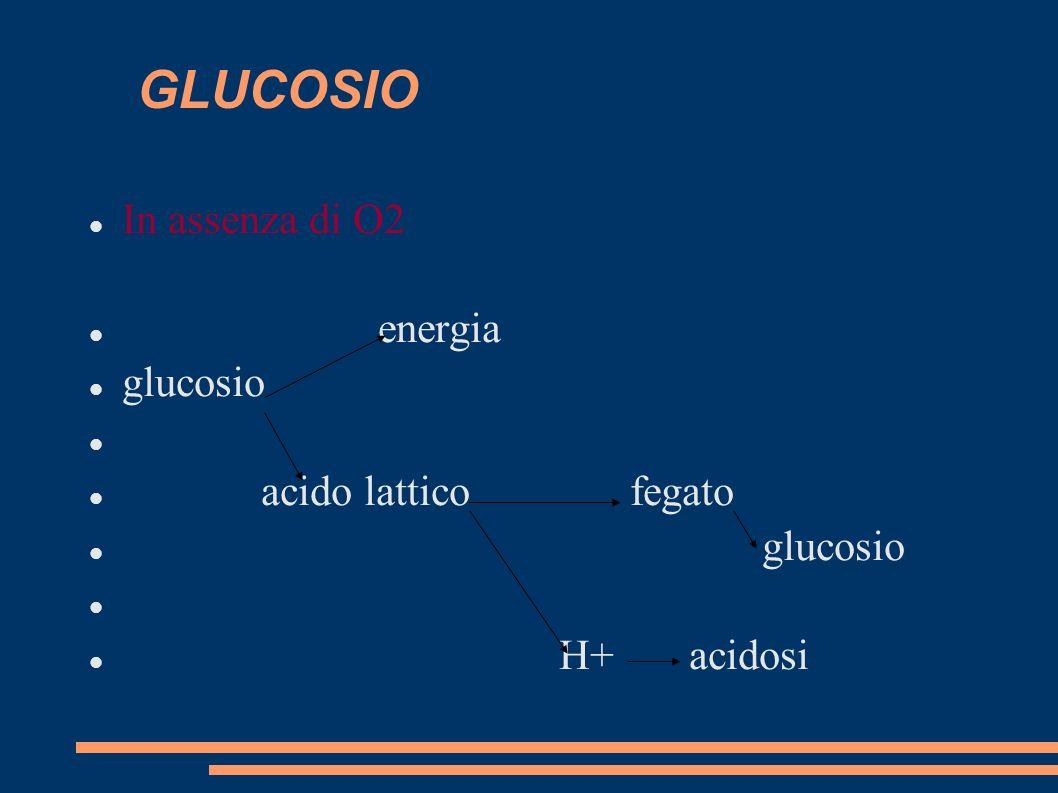 GLUCOSIO In assenza di O2 energia glucosio acido lattico fegato