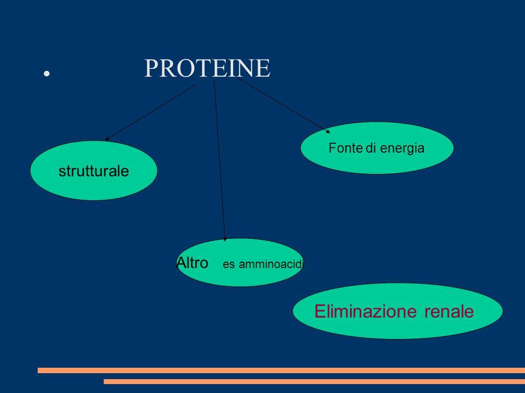 PROTEINE Eliminazione renale strutturale Altro es amminoacidi