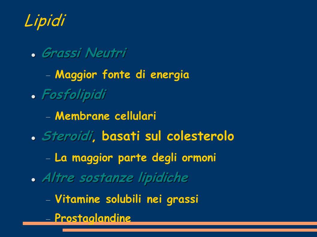 Lipidi Grassi Neutri Fosfolipidi Steroidi, basati sul colesterolo