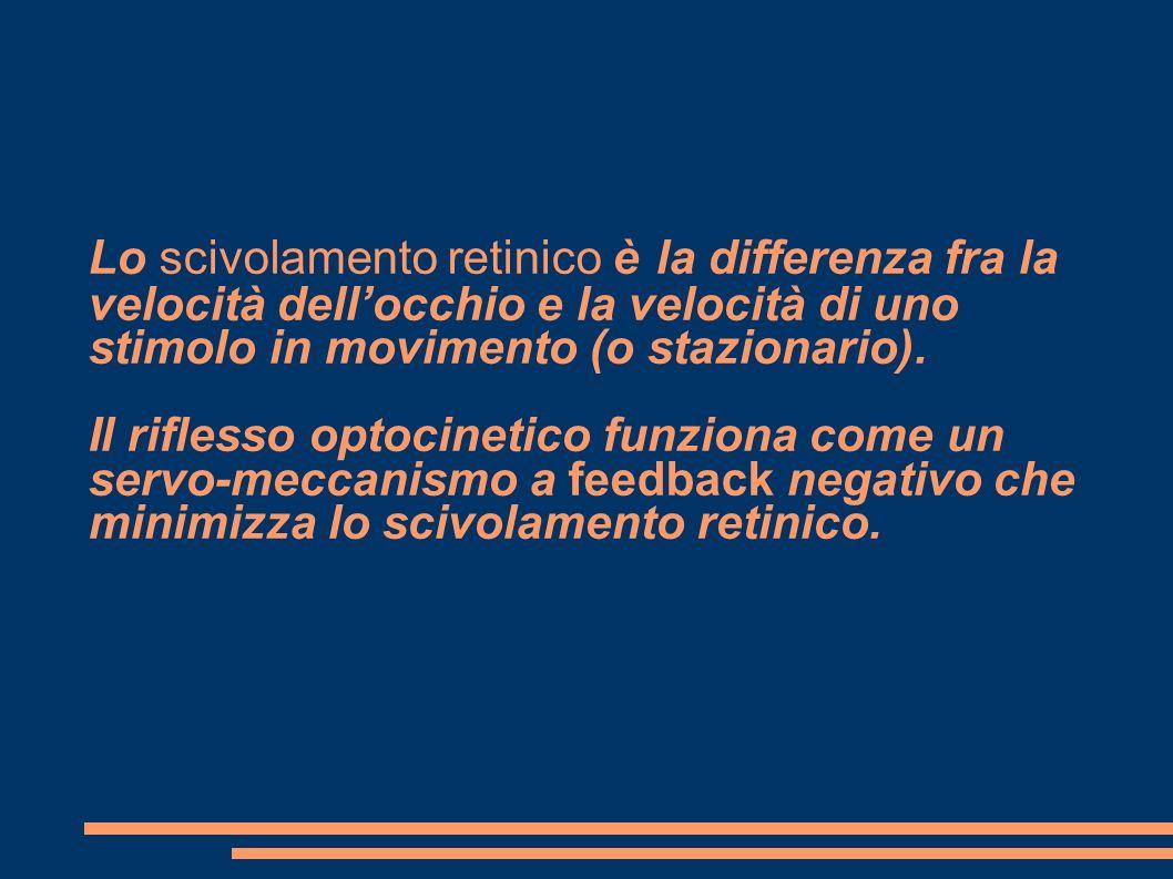 Lo scivolamento retinico è la differenza fra la velocità dell'occhio e la velocità di uno stimolo in movimento (o stazionario).