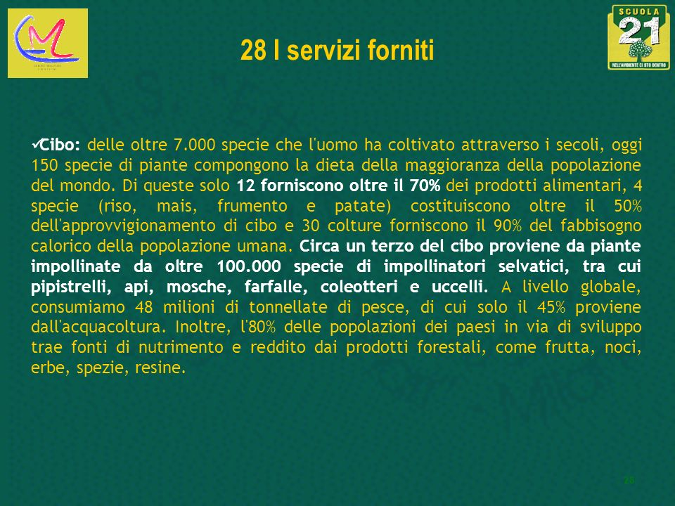 28 I servizi forniti