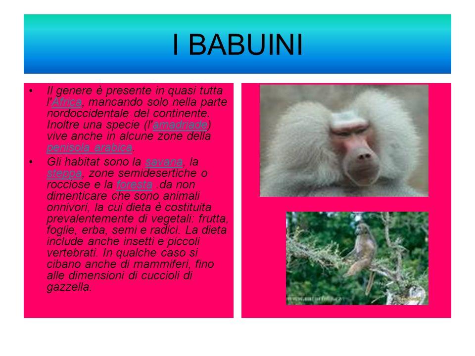 I BABUINI