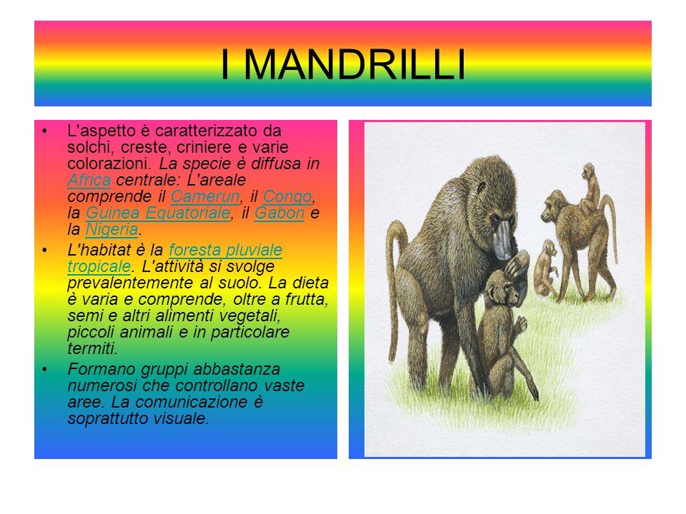 I MANDRILLI