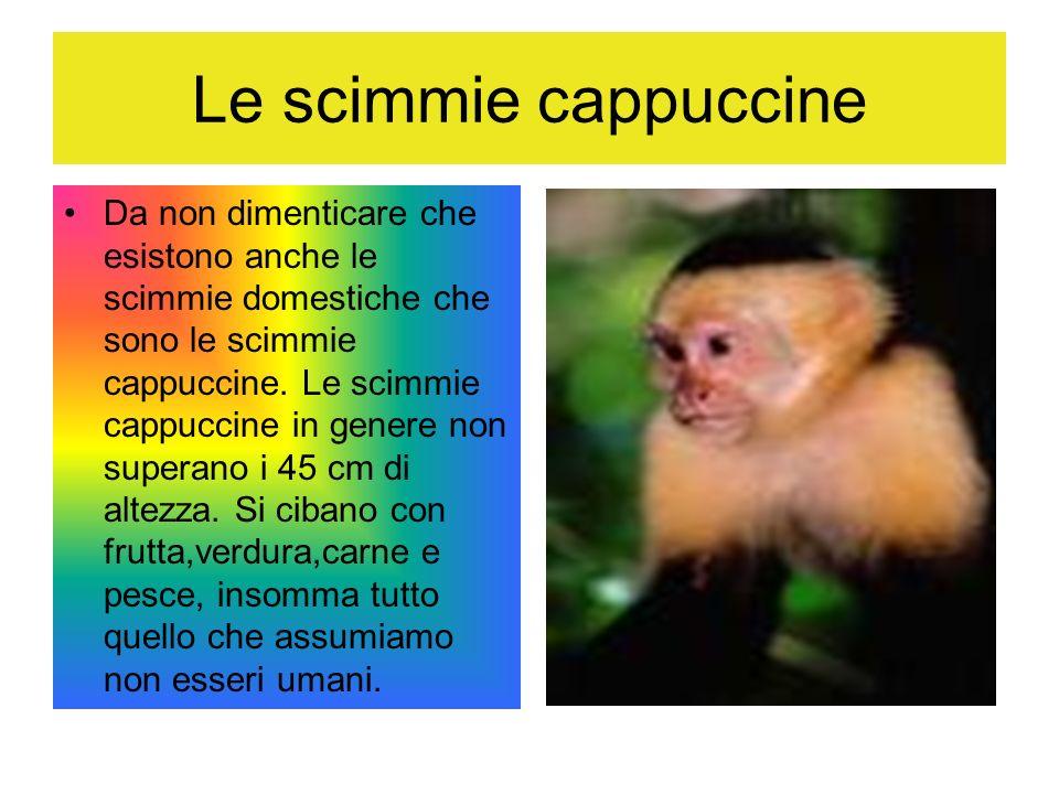 Le scimmie cappuccine