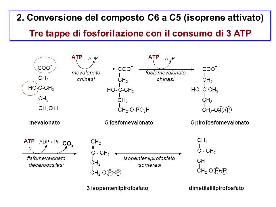2. Conversione del composto C6 a C5 (isoprene attivato)