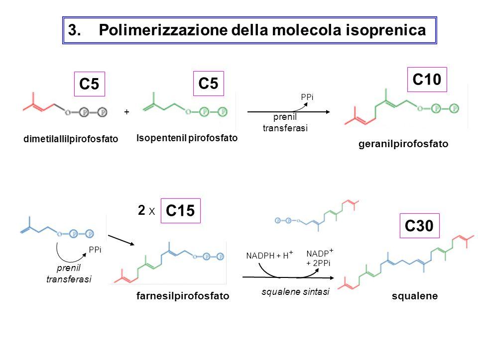 dimetilallilpirofosfato Isopentenil pirofosfato
