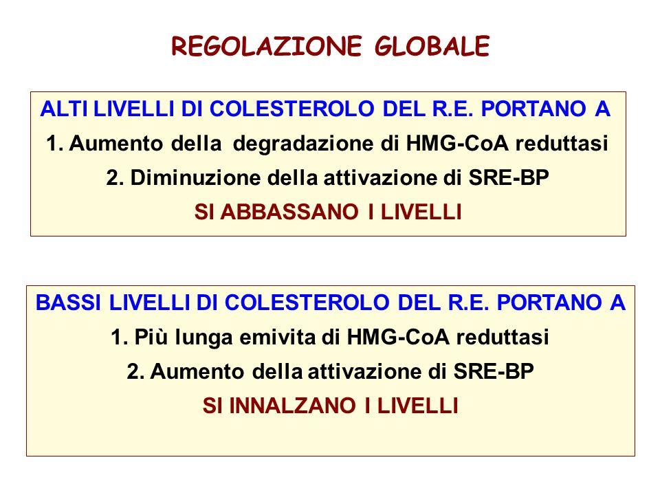 REGOLAZIONE GLOBALE ALTI LIVELLI DI COLESTEROLO DEL R.E. PORTANO A