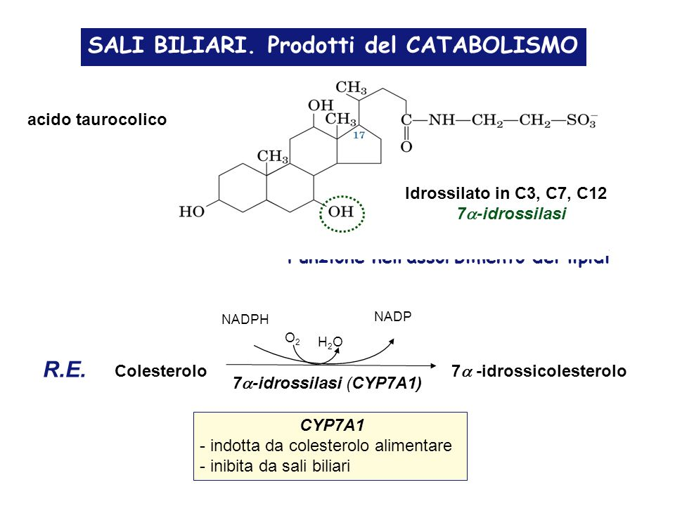 SALI BILIARI. Prodotti del CATABOLISMO