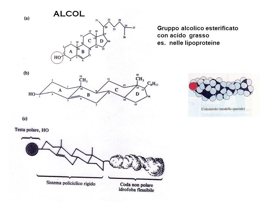 ALCOL Gruppo alcolico esterificato con acido grasso