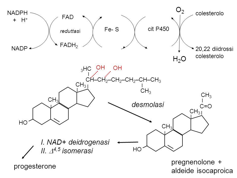 O2 FAD H2O desmolasi I. NAD+ deidrogenasi II. 4,5 isomerasi