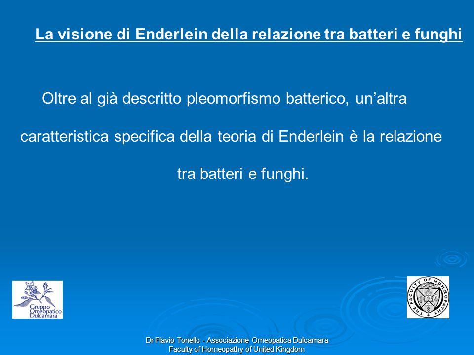 La visione di Enderlein della relazione tra batteri e funghi