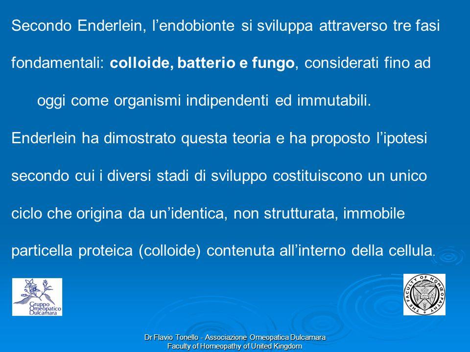 Secondo Enderlein, l'endobionte si sviluppa attraverso tre fasi fondamentali: colloide, batterio e fungo, considerati fino ad