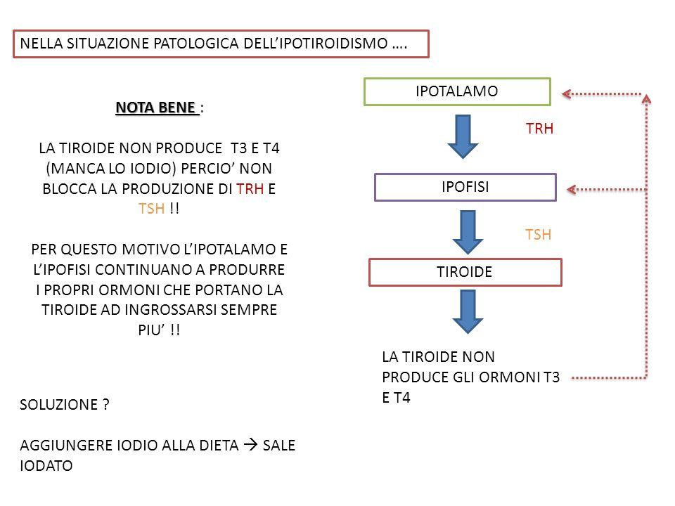 NELLA SITUAZIONE PATOLOGICA DELL'IPOTIROIDISMO ….