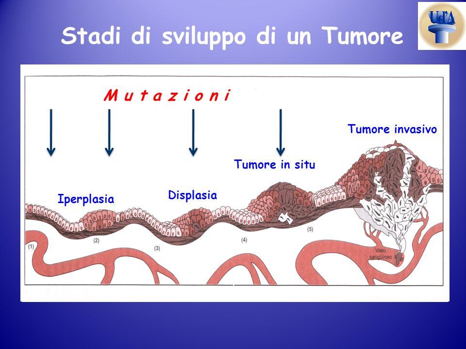 Stadi di sviluppo di un Tumore