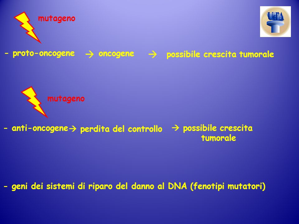   mutageno - proto-oncogene oncogene possibile crescita tumorale