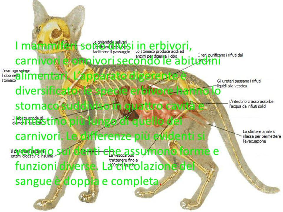 I mammiferi sono divisi in erbivori, carnivori e onnivori secondo le abitudini alimentari.