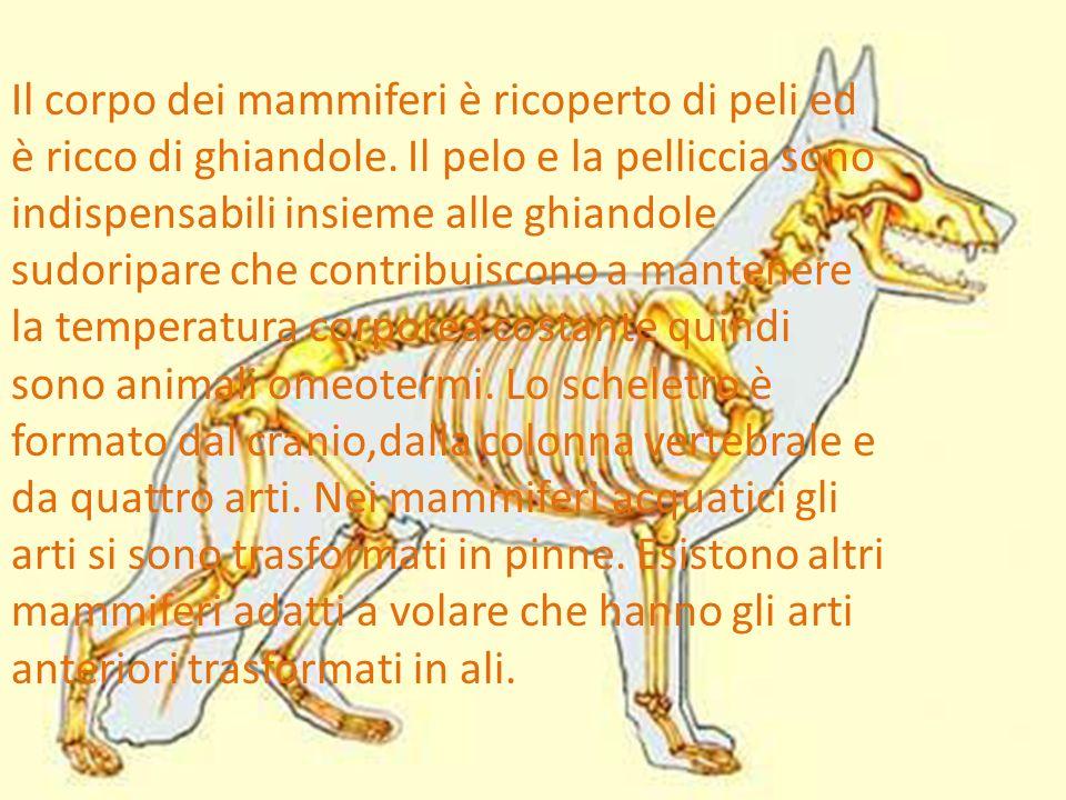 Il corpo dei mammiferi è ricoperto di peli ed è ricco di ghiandole