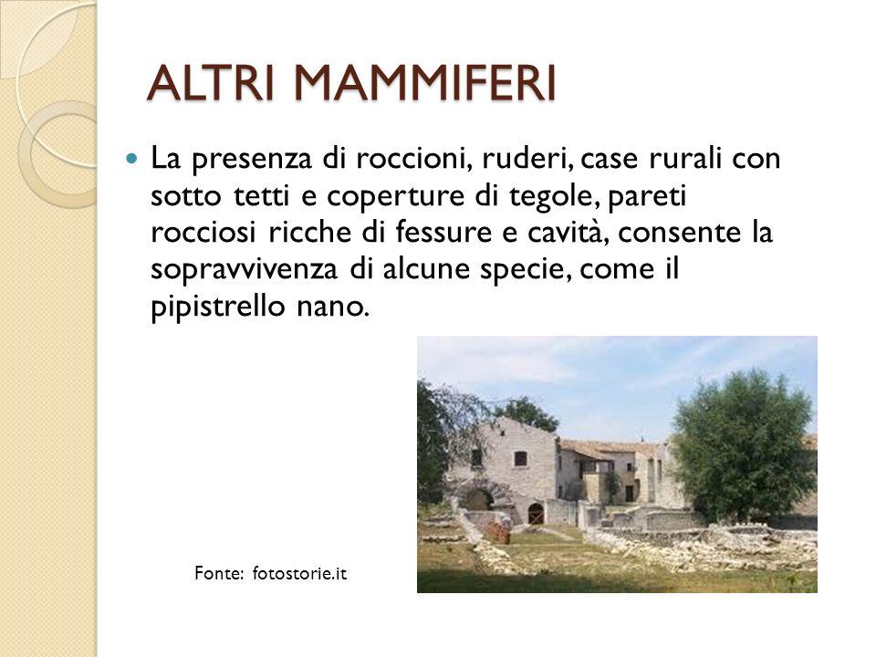 ALTRI MAMMIFERI